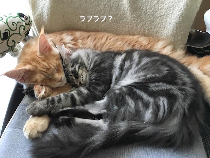 f:id:chikojirou:20180208224658j:plain