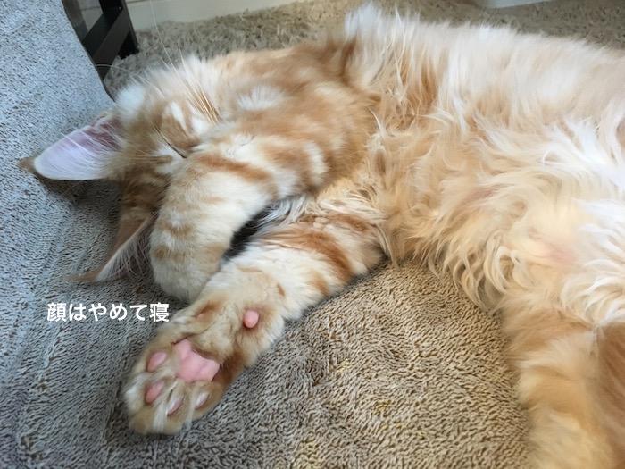 f:id:chikojirou:20180208224733j:plain