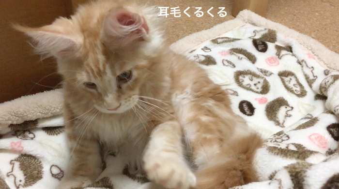 f:id:chikojirou:20180212134314p:plain