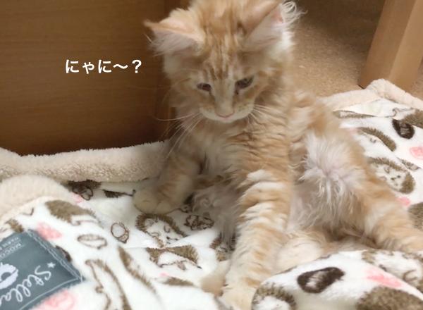 f:id:chikojirou:20180212134333p:plain