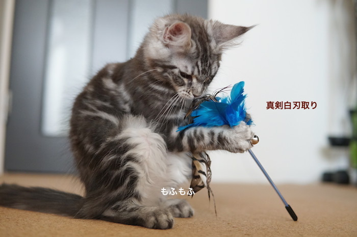 f:id:chikojirou:20180212134434j:plain