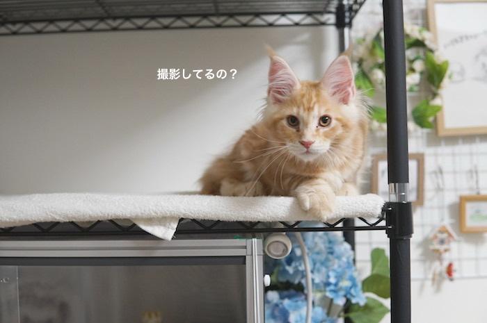f:id:chikojirou:20180212134554j:plain