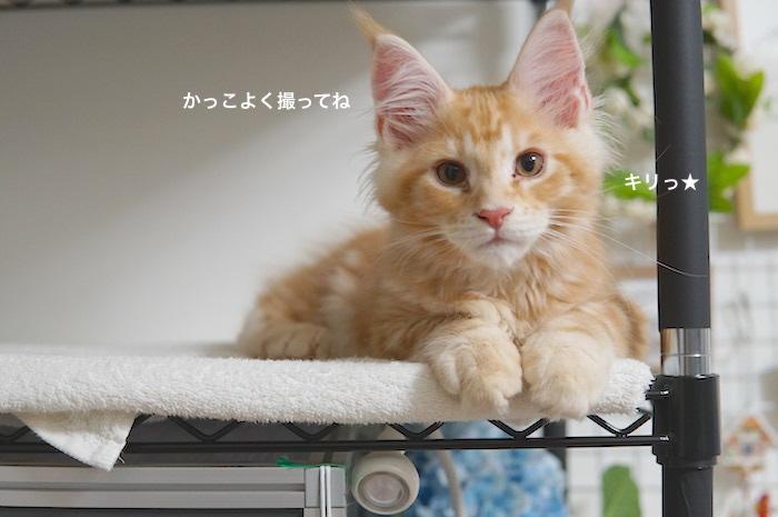 f:id:chikojirou:20180212134607j:plain