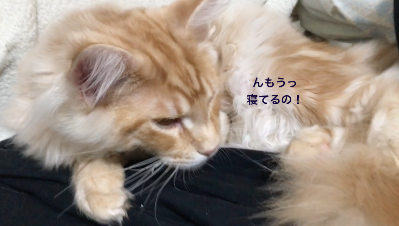 f:id:chikojirou:20180213222810p:plain