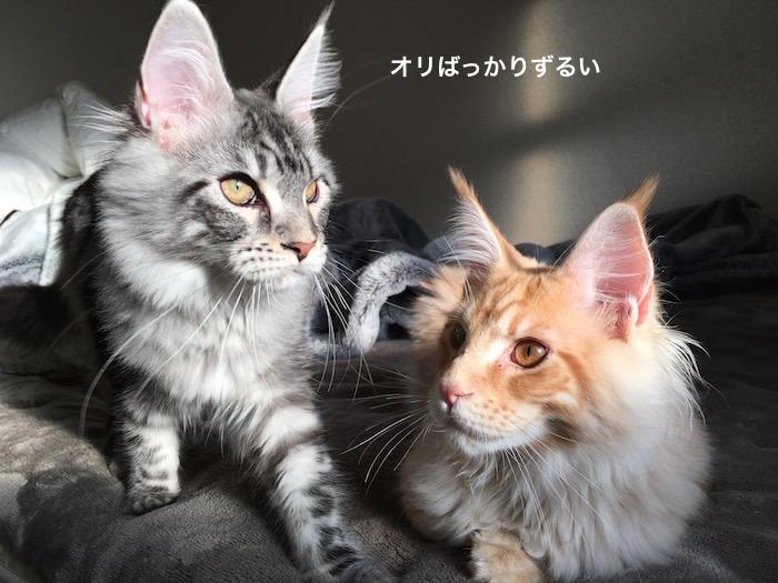 f:id:chikojirou:20180214220506j:plain