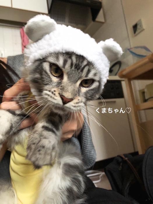 f:id:chikojirou:20180217215507j:plain