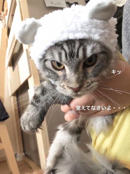 f:id:chikojirou:20180217215520j:plain