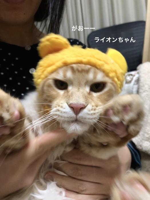 f:id:chikojirou:20180217215625j:plain