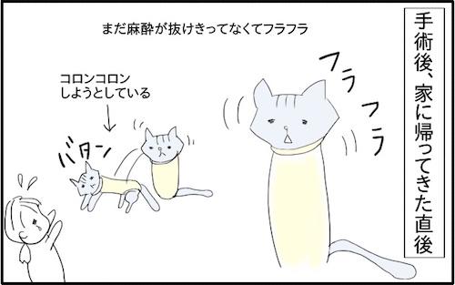 f:id:chikojirou:20180217215820j:plain