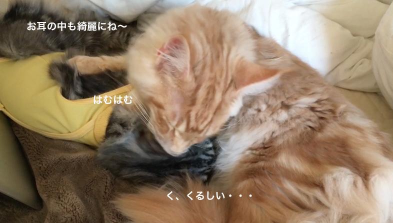 f:id:chikojirou:20180218210928p:plain