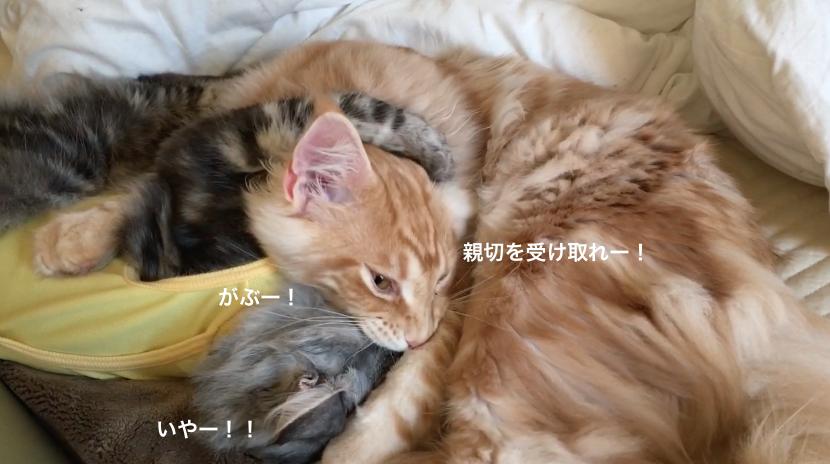 f:id:chikojirou:20180218211137p:plain