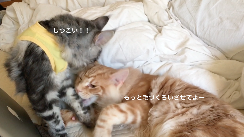 f:id:chikojirou:20180218211325p:plain