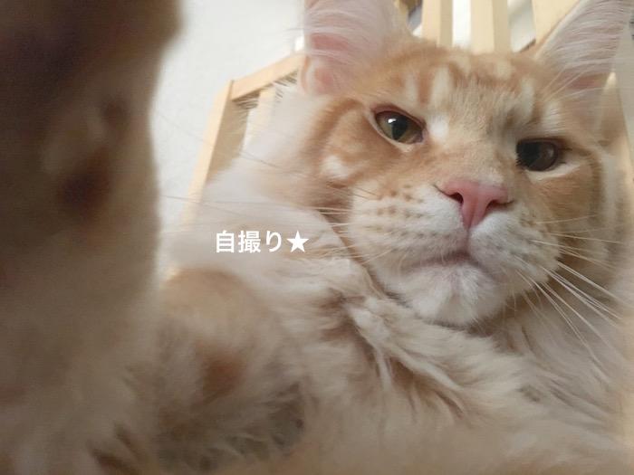 f:id:chikojirou:20180225154914j:plain