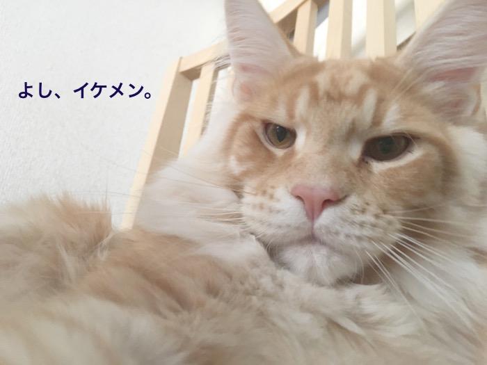 f:id:chikojirou:20180225154927j:plain