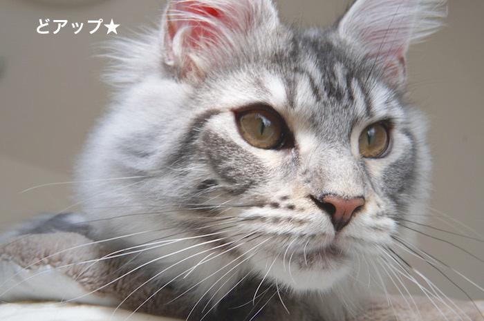 f:id:chikojirou:20180225154954j:plain