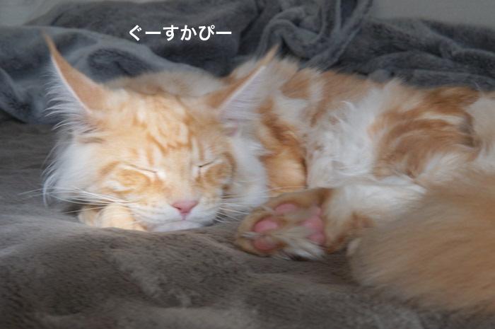 f:id:chikojirou:20180225155006j:plain