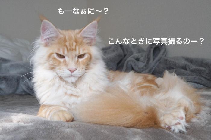 f:id:chikojirou:20180225155017j:plain