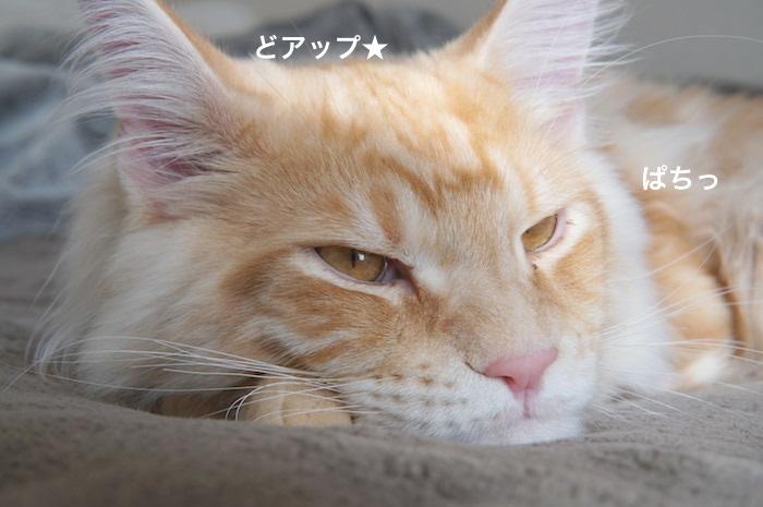 f:id:chikojirou:20180225155029j:plain