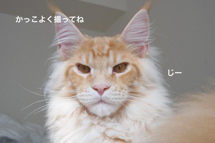 f:id:chikojirou:20180225155045j:plain