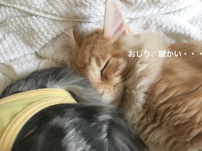 f:id:chikojirou:20180225155214j:plain