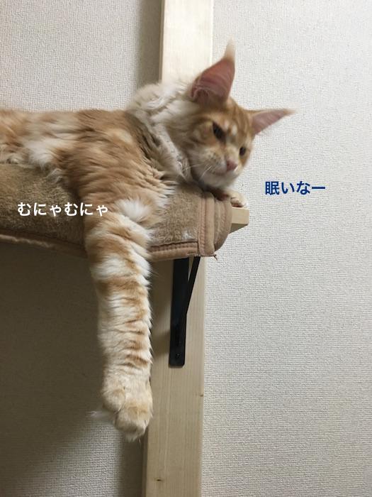 f:id:chikojirou:20180226215720j:plain