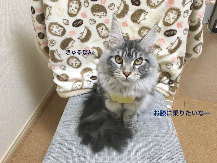 f:id:chikojirou:20180226215941j:plain