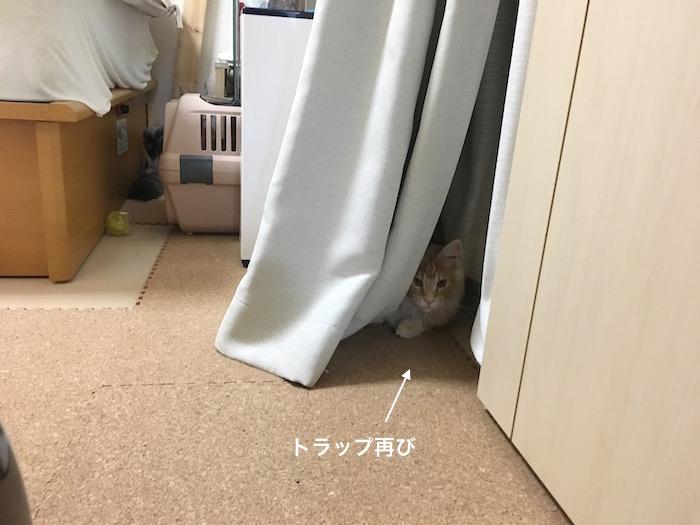 f:id:chikojirou:20180226215959j:plain