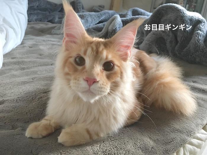 f:id:chikojirou:20180303215441j:plain