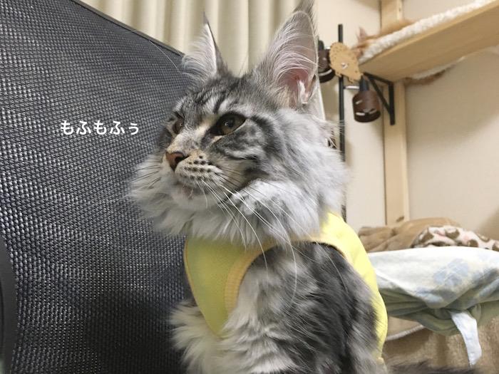 f:id:chikojirou:20180303215507j:plain
