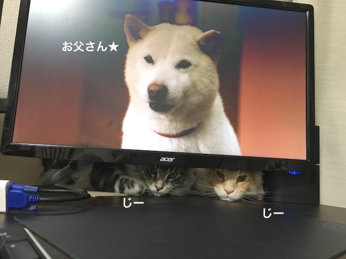 f:id:chikojirou:20180303215759j:plain