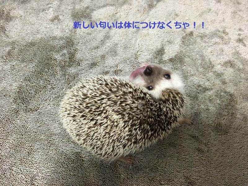 f:id:chikojirou:20180303220341j:plain