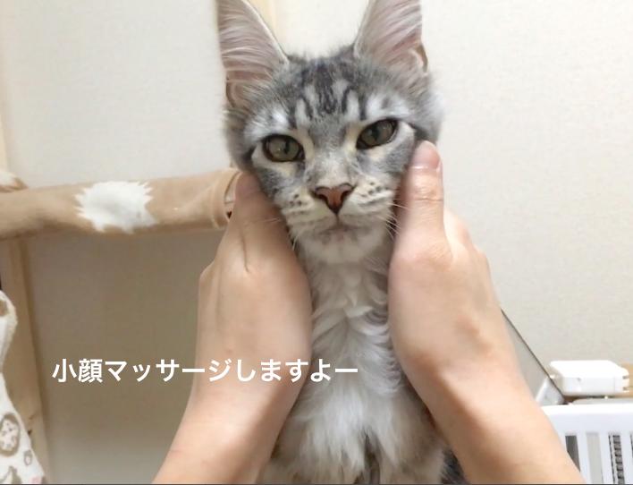 f:id:chikojirou:20180313215036p:plain