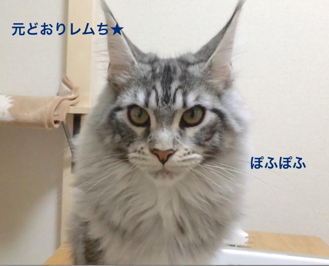f:id:chikojirou:20180313215221p:plain