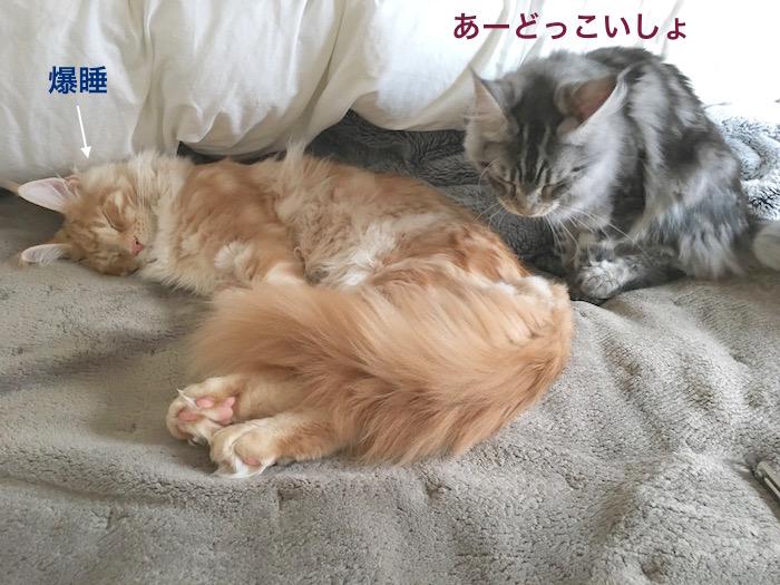 f:id:chikojirou:20180313215353j:plain