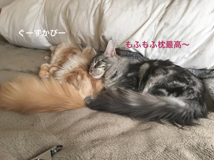 f:id:chikojirou:20180313215421j:plain
