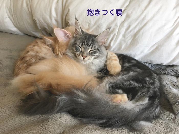 f:id:chikojirou:20180313215526j:plain