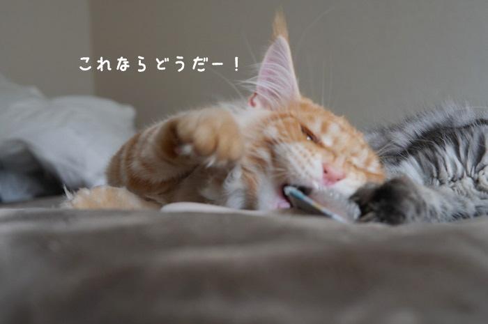 f:id:chikojirou:20180316223214j:plain