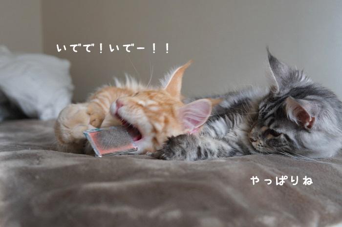 f:id:chikojirou:20180316223241j:plain