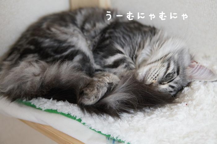 f:id:chikojirou:20180321171106j:plain