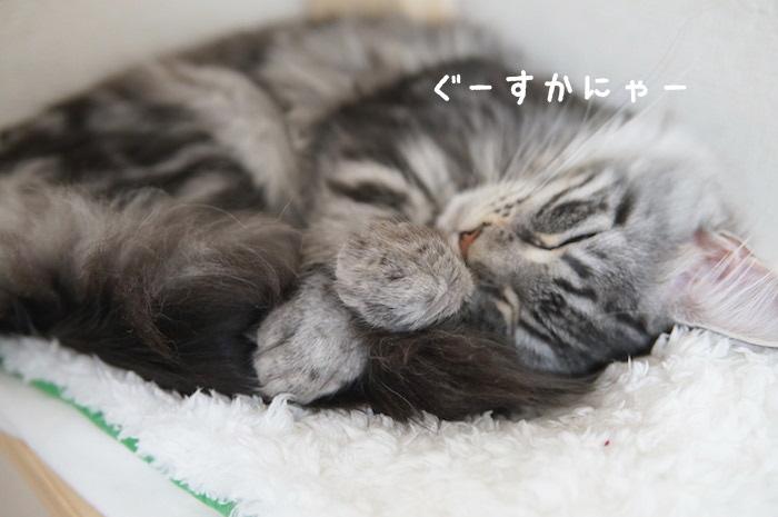 f:id:chikojirou:20180321171136j:plain