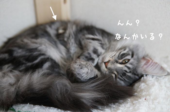 f:id:chikojirou:20180321171151j:plain