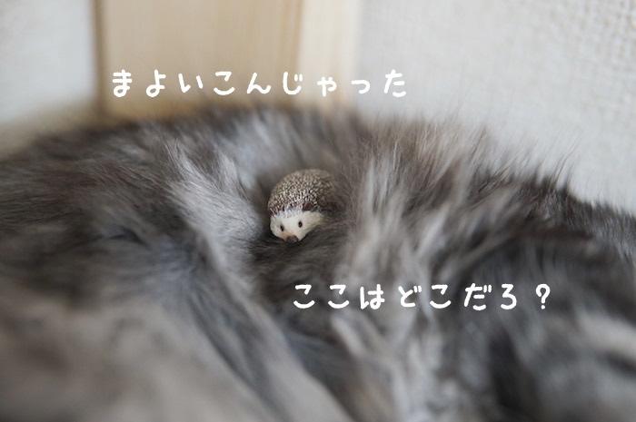 f:id:chikojirou:20180321171242j:plain