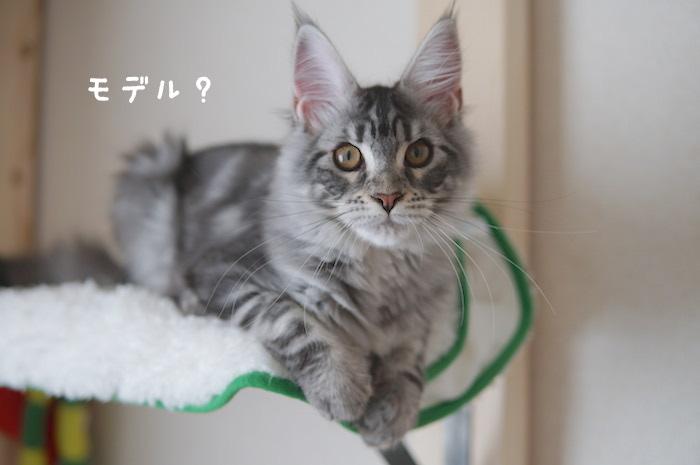 f:id:chikojirou:20180322220408j:plain