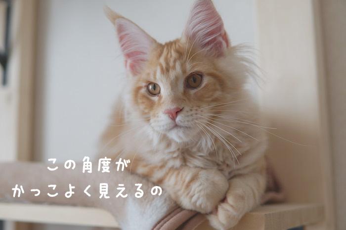 f:id:chikojirou:20180322220449j:plain
