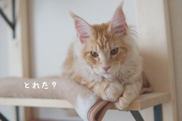 f:id:chikojirou:20180322220503j:plain