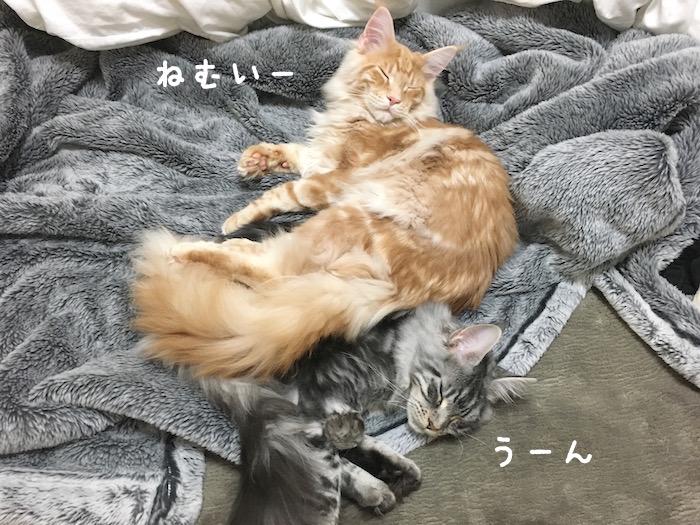 f:id:chikojirou:20180322220537j:plain