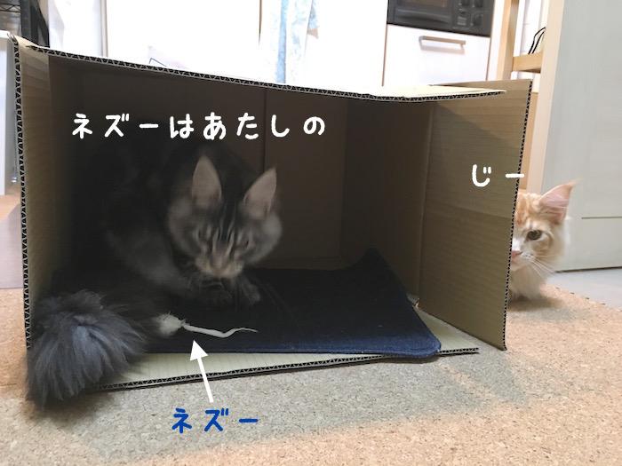 f:id:chikojirou:20180322220606j:plain