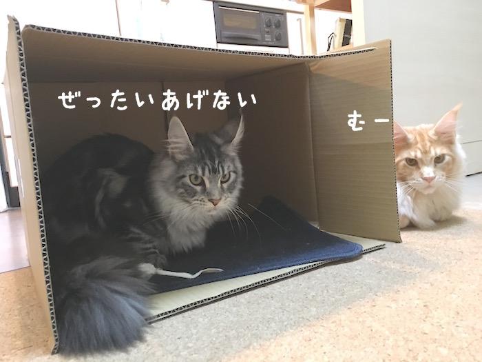 f:id:chikojirou:20180322220631j:plain