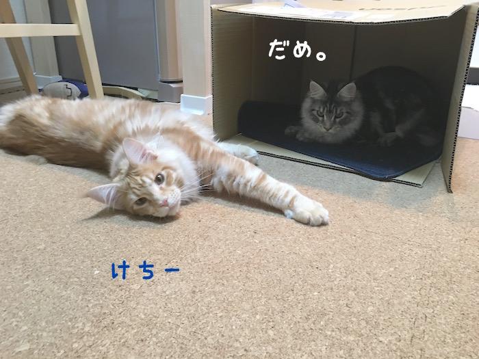 f:id:chikojirou:20180322220647j:plain