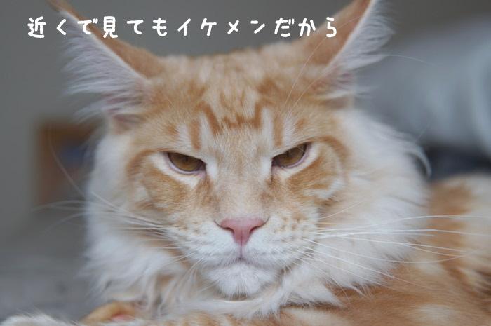 f:id:chikojirou:20180323220536j:plain